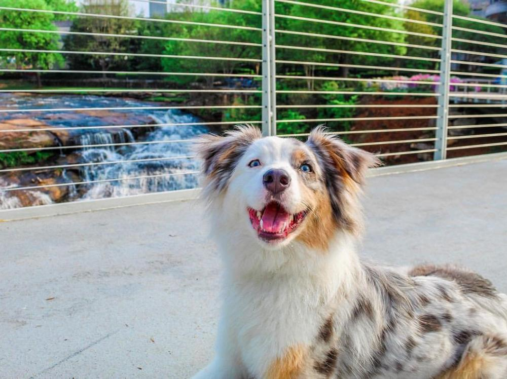 Dog-Friendly Experiences in Greenville, SC