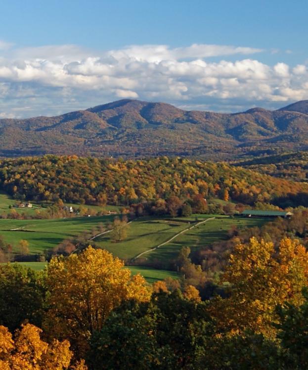 Fall Foliage - James Beeler