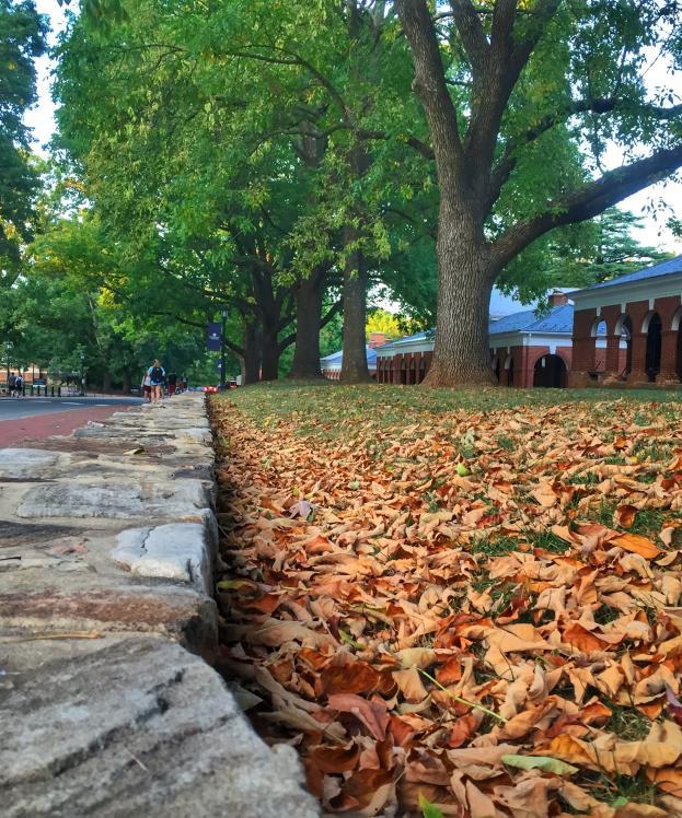 UVA Fall Color