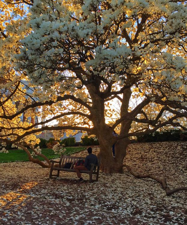 Spring at UVA