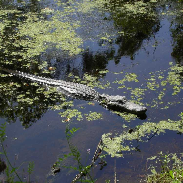 The Most Instagram Worthy Nature Spots in Jefferson Parish