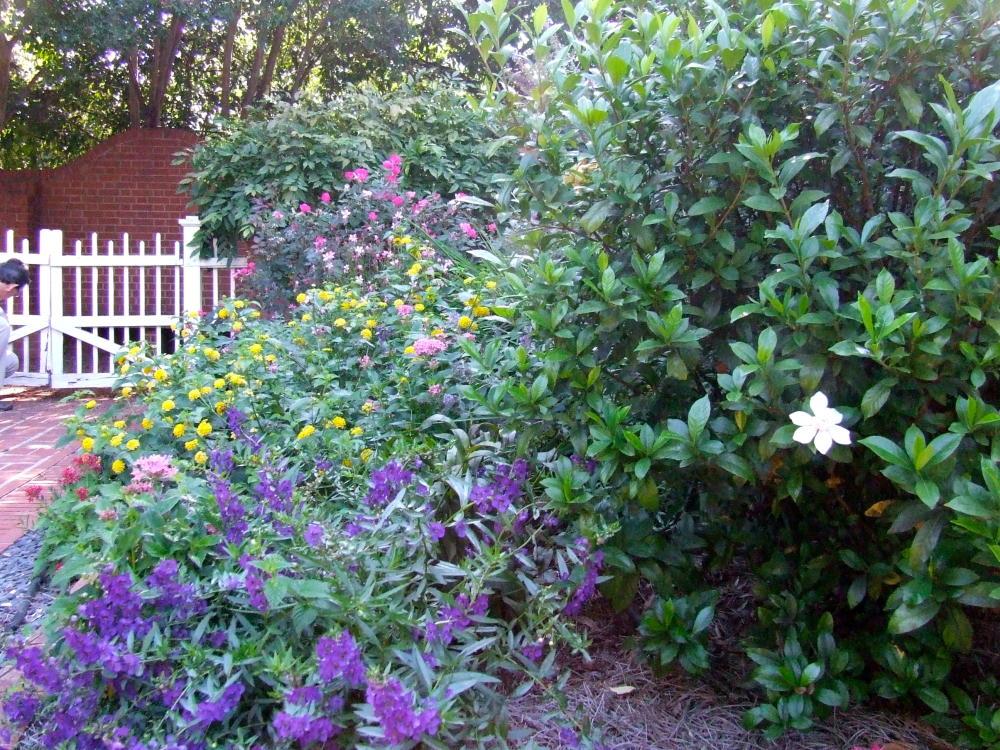 Beautiful flowers in bloom at Piedmont Garden in Athens, GA
