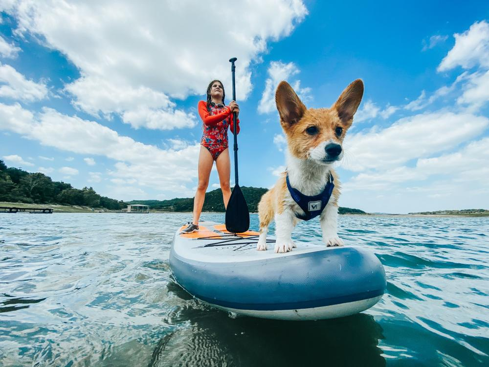 Woman and her corgi dog on a Stand up paddleboard on Lake Travis near Austin Texas