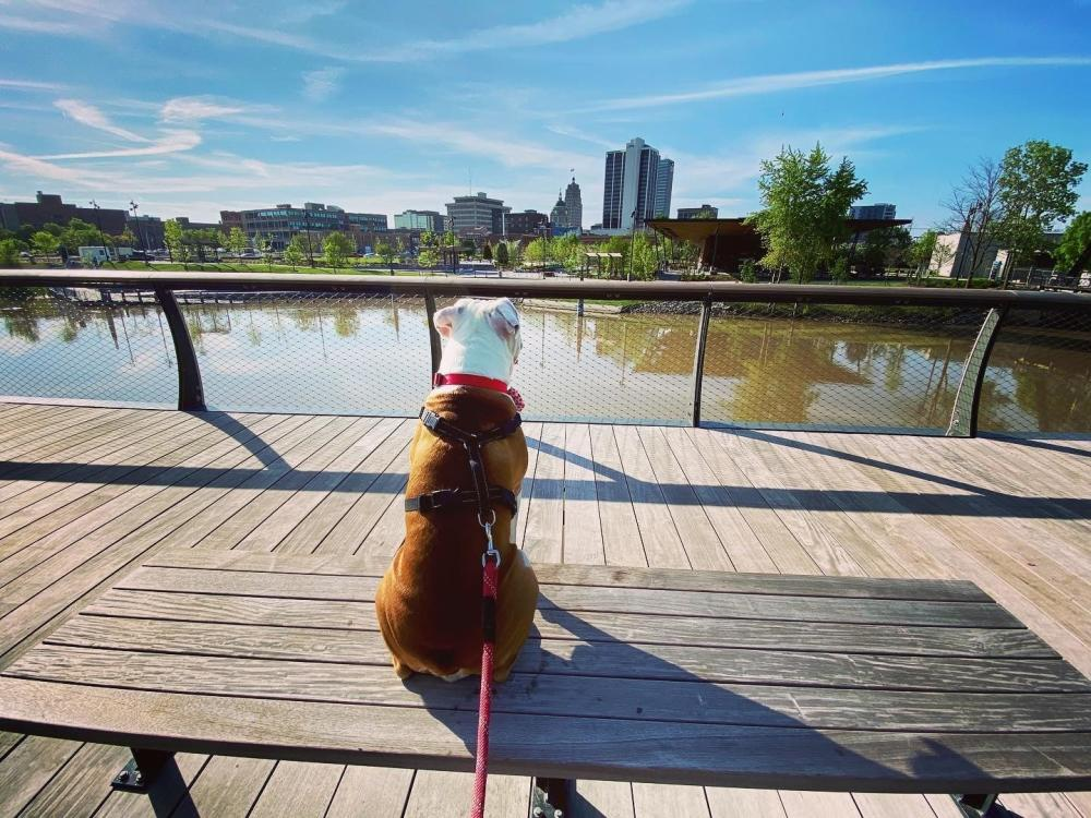 Dog looking at downtown Fort Wayne skyline