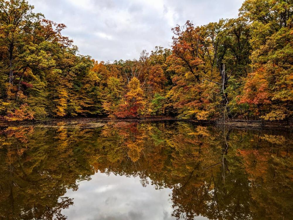 Fall trees reflected off the water at Lindenwood Nature Preserve in Fort Wayne