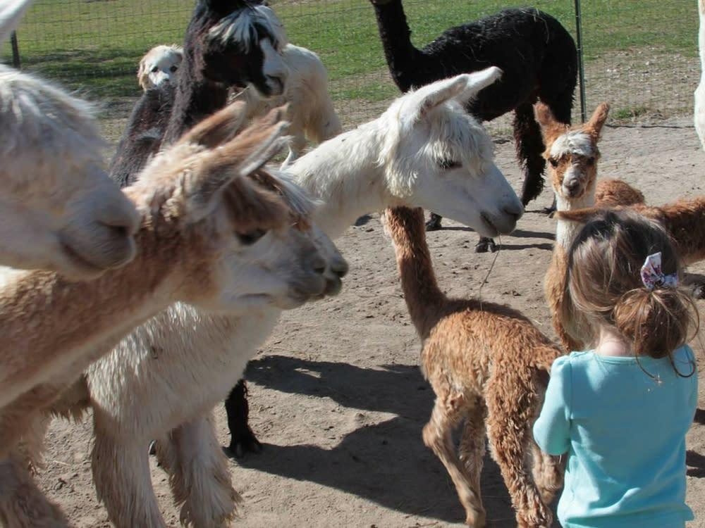 Montrose Alpaca Farms