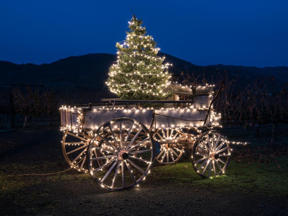 Holiday Lights in Napa Valley Vineyard