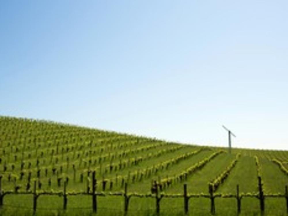 Vineyards Fields