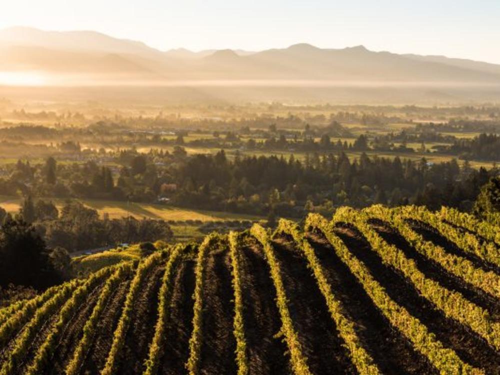 Bob-McClenahan-Spring-Mnt-vineyard-600x400.jpg