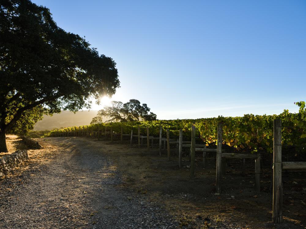 October Vineyards 2016