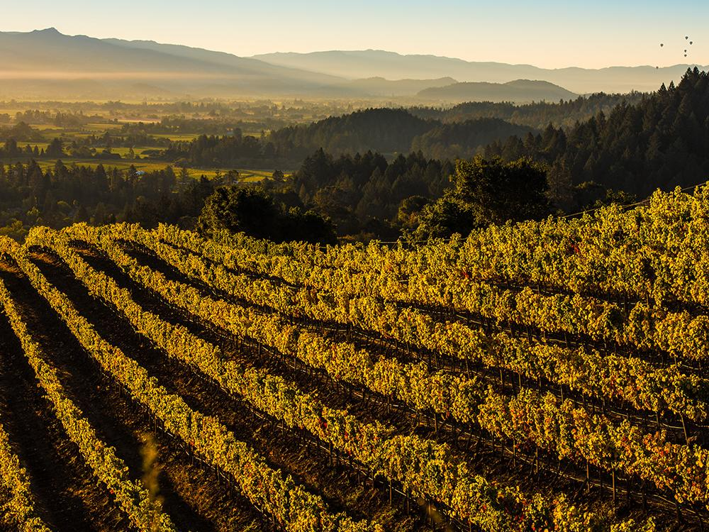 Gold Country – Top 5 Reasons to Come to Napa Valley this Fall