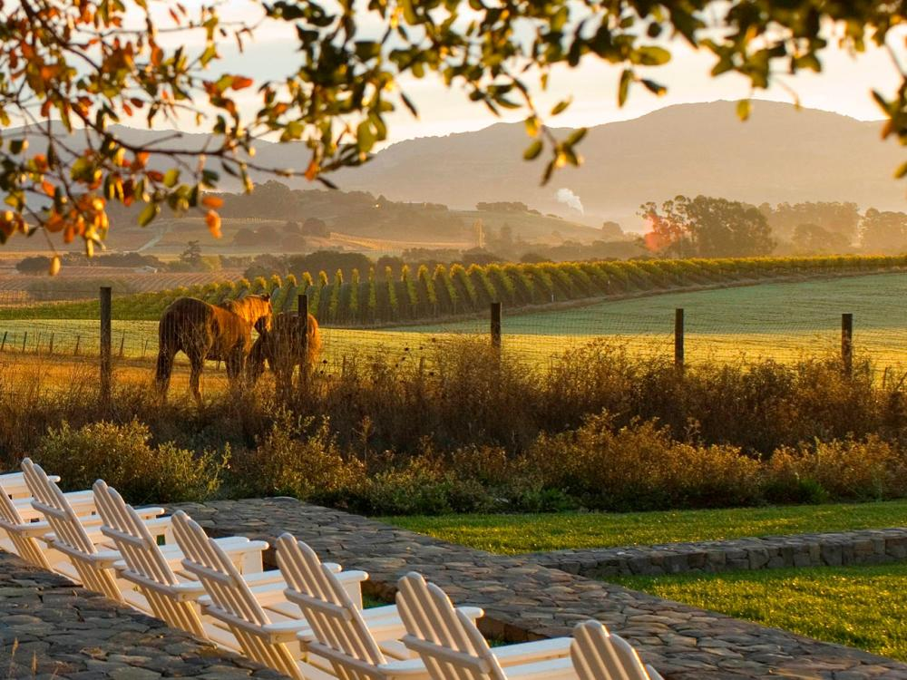 The Carneros Resort and Spa Napa Valley horses