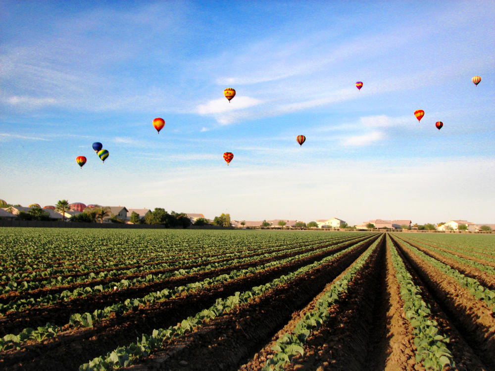 Farm field hot air balloons above