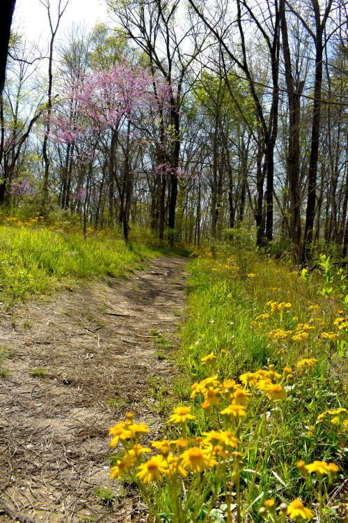Deam Lake Knobstone Spring Wildflowers