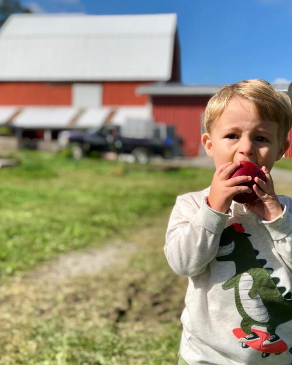 Boy eating apple at Owen's Orchards.
