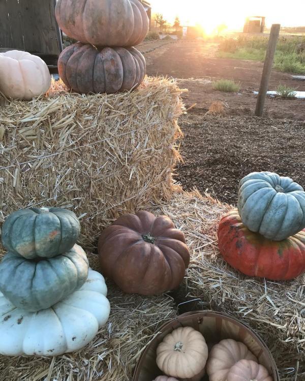 Sweet Thistle Farms 2