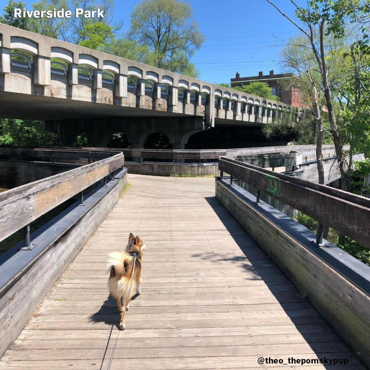 Pup in Riverside Park