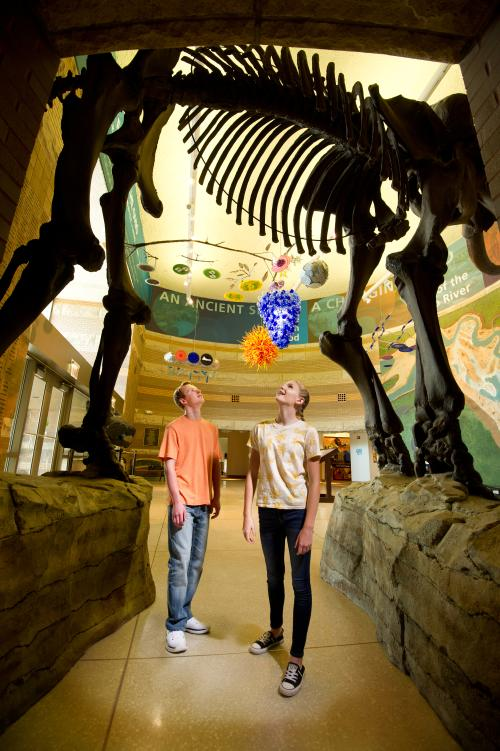 Two people looking up in awe at a dinosaur fossil in the Falls of the Ohio Interpretive Center.