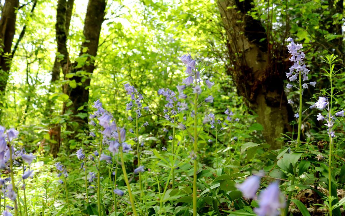 Wildflowers at Watershed Park