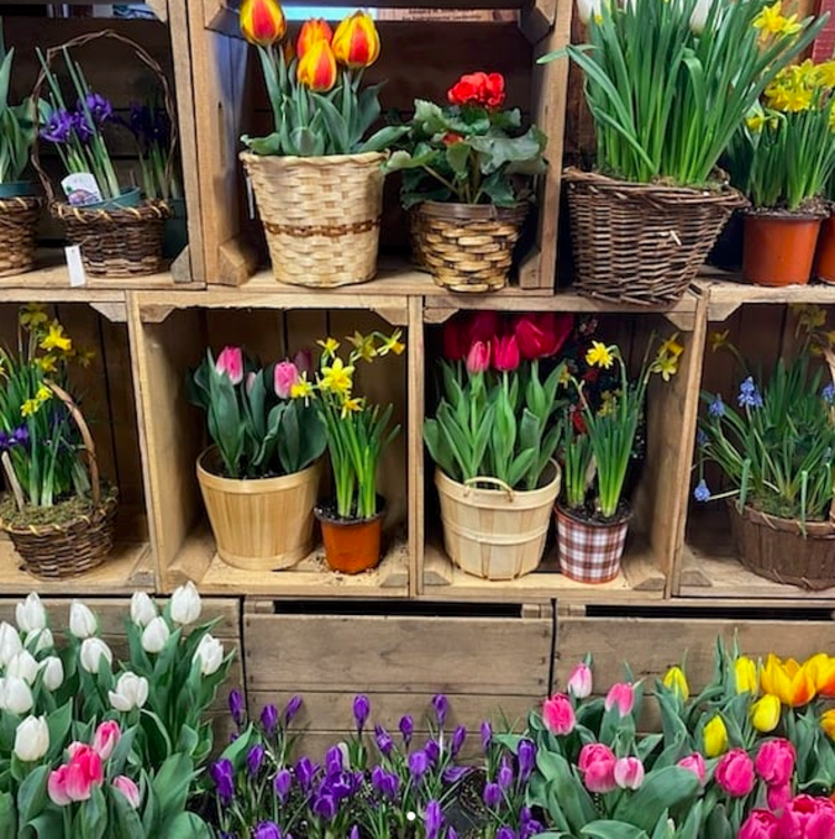 Spring flowers for purchase at the Terhune Orchards gift shop