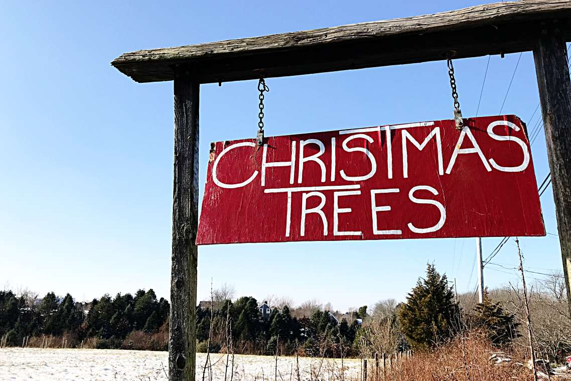 Cut Your Own Christmas Tree Near Me.Where To Cut Your Own Christmas Tree In Newport Discover