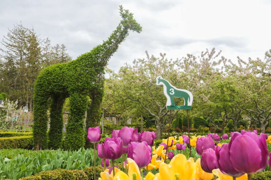 Green Animals Topiary Garden Discover Newport Rhode Island
