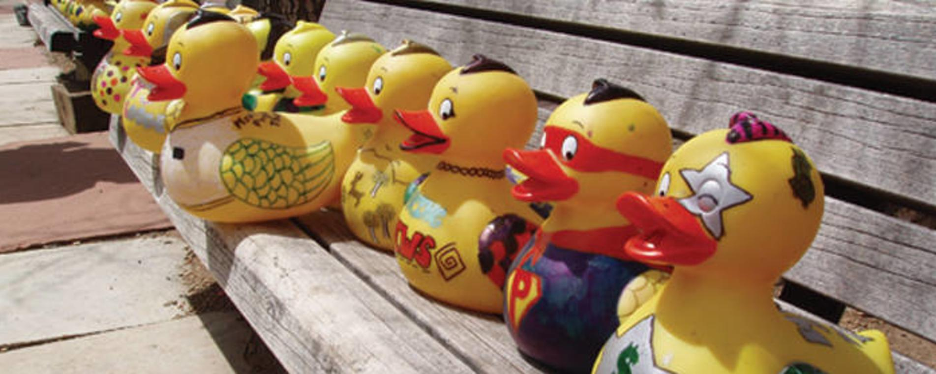 Duck Race Header