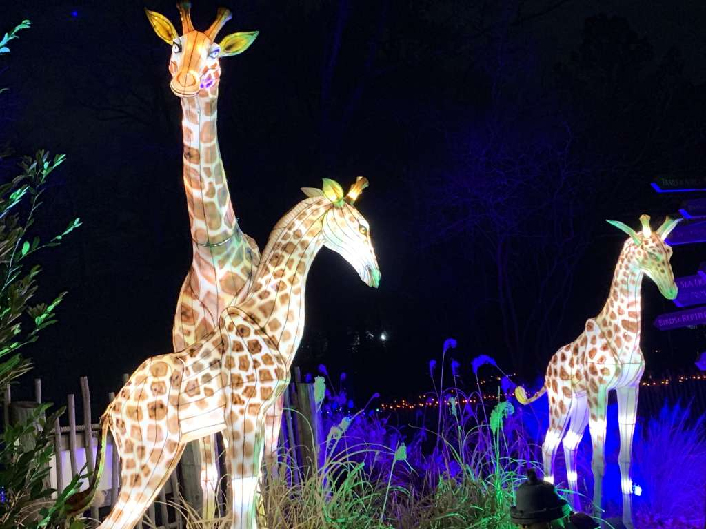 Photograph of Asian Lantern Giraffes at the Roger Williams Zoo