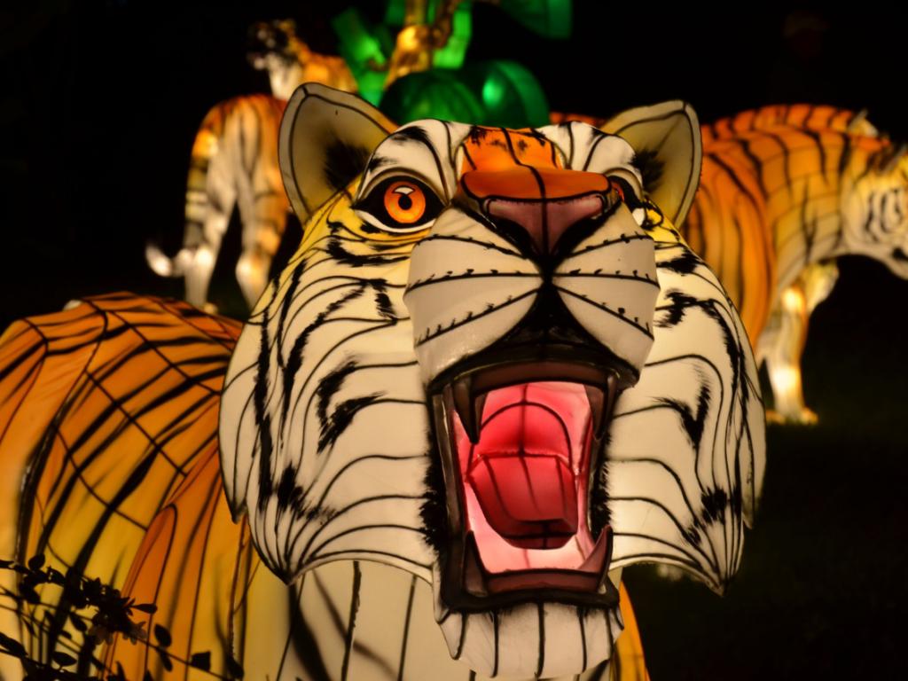 Illuminated tiger lantern at the Roger Williams Park Zoo in RI