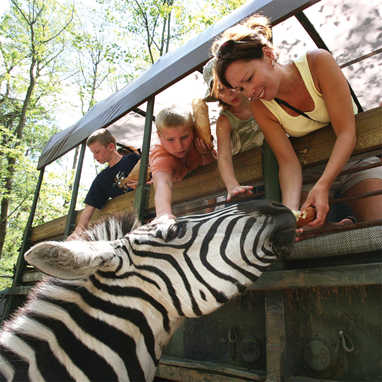 Family leaning out of the Catoctin Zoo ride to feed the Zebras