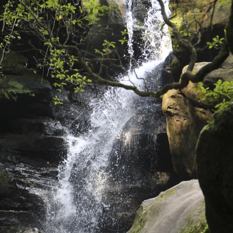 Waterfall at Dismals Canyon