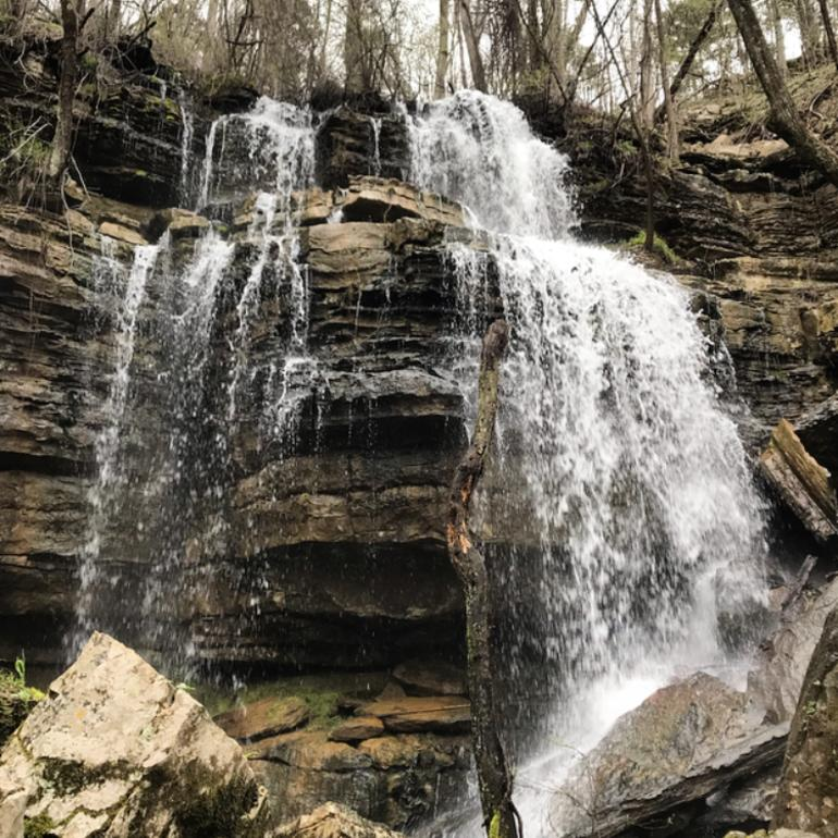 bethel springs nature preserve on the land trust