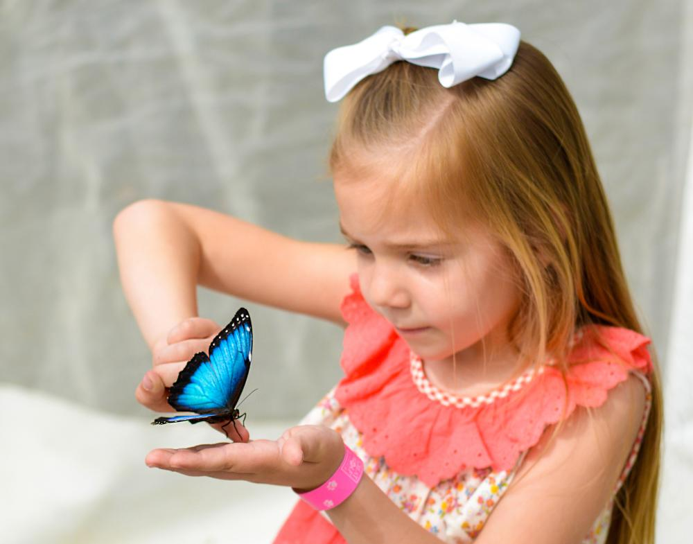 Botanical Conservatory Live Butterfly Exhibit