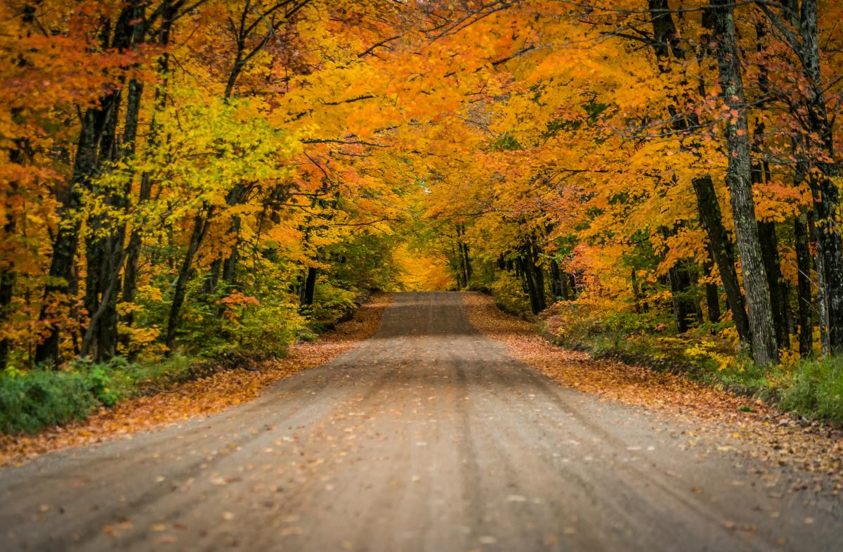 Fall colors on County Road 510