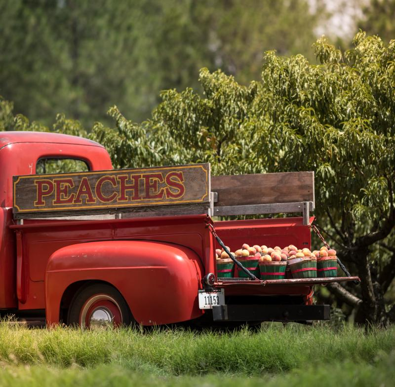 """An old red truck sits at an orchard with wooden """"Peaches"""" sign and baskets of fresh peaches"""