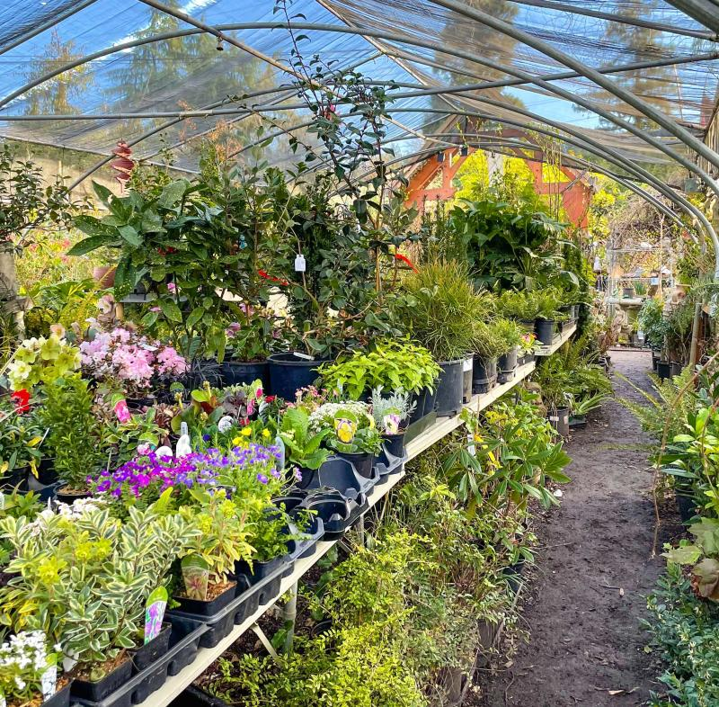 A covered aisle of indoor plants in the springtime.