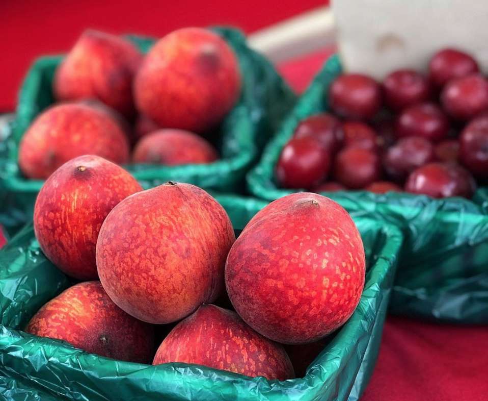 Nectarines for sale at Texas Farmers Market at Lakeline near Austin Texas