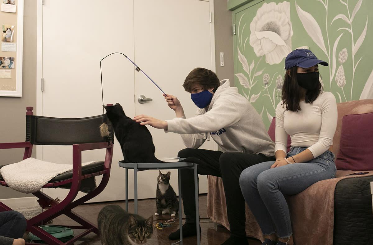 Cat Tales Cat Cafe, Chapel Hill