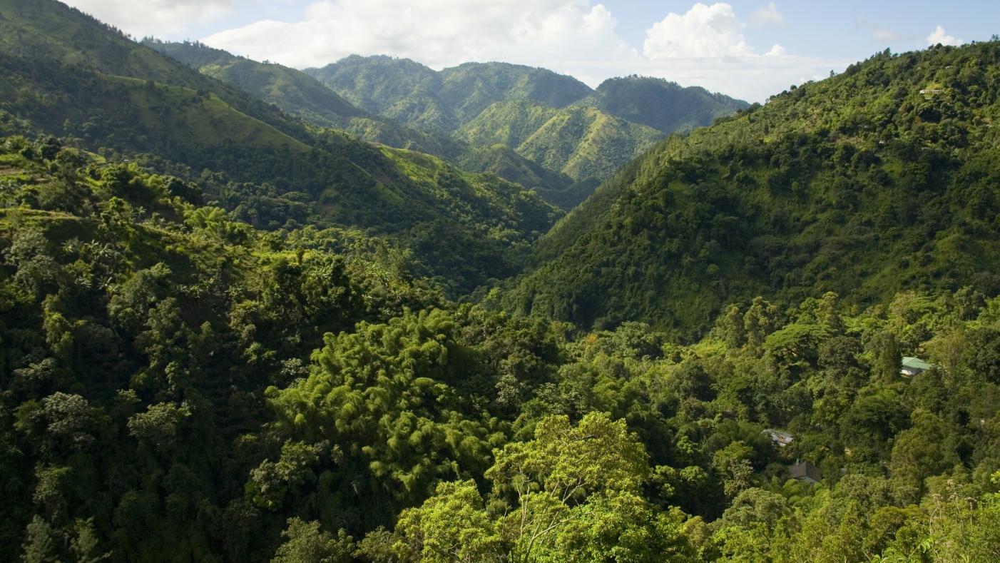 Blue Mountain Peak Jamaica