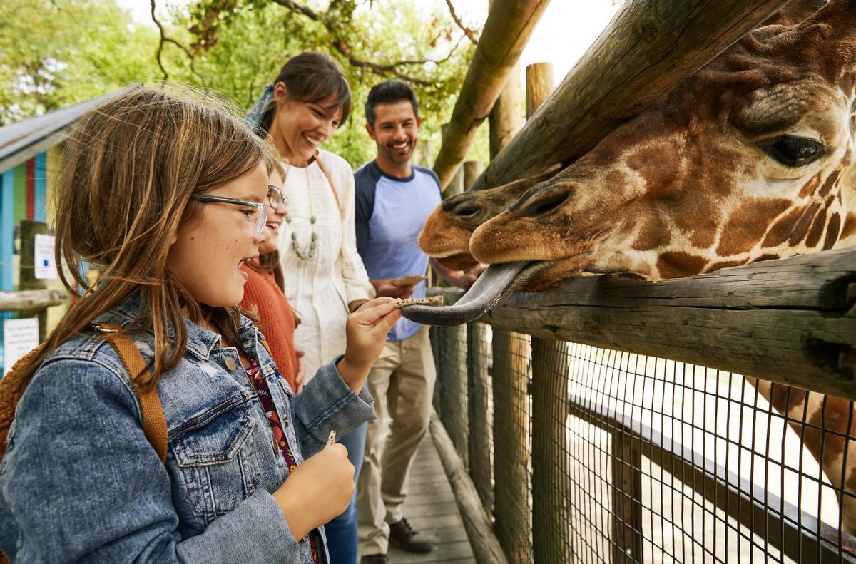 Family feeding giraffes at Dickerson Park Zoo