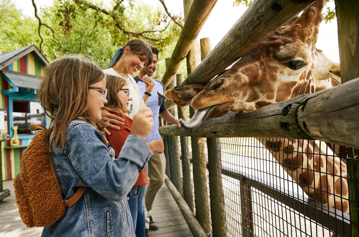 Feeding Giraffes at Dickerson Park Zoo