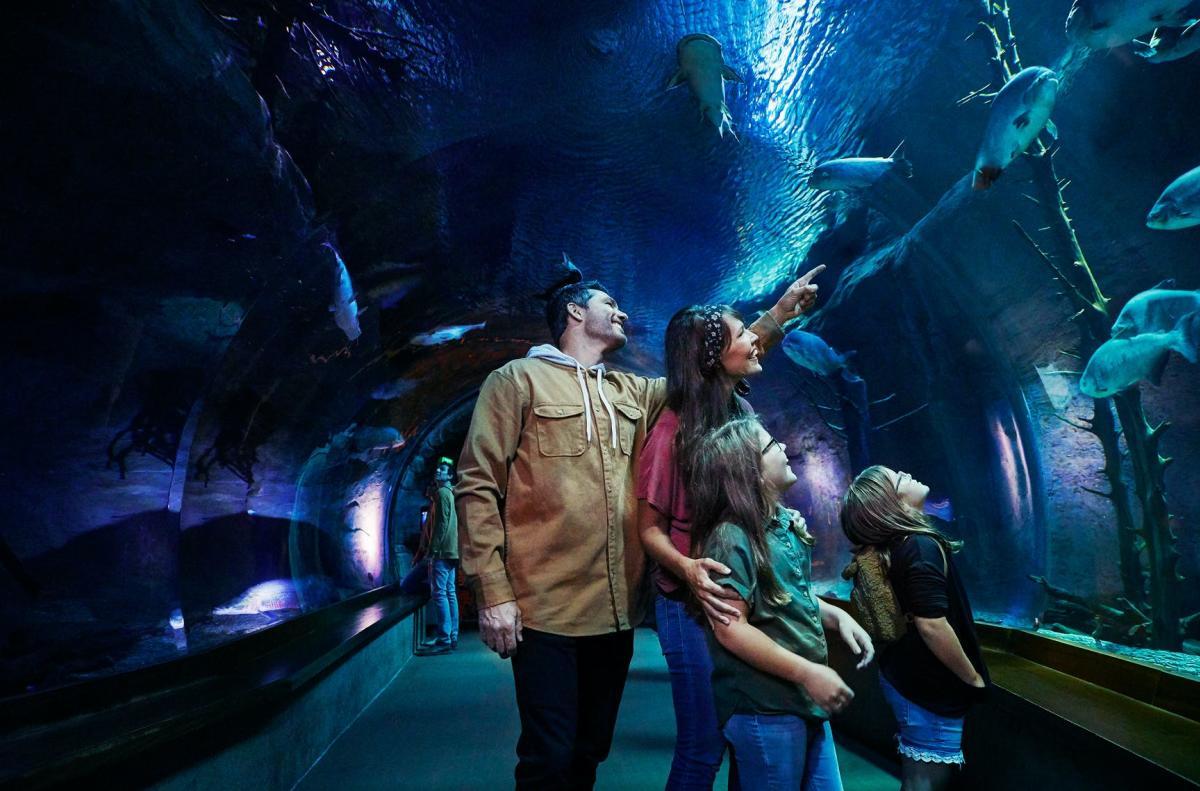 Wonders of Wildlife National Museum & Aquarium