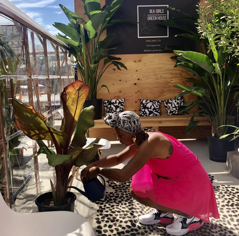 One of the owners of Black Girls Greenhouse tends to a Red Abyssinian Banana Tree plant.
