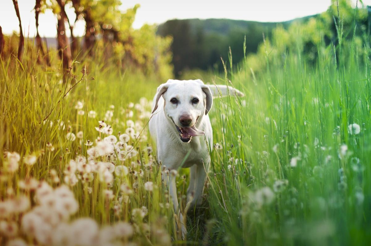 happy dog in a vineyard