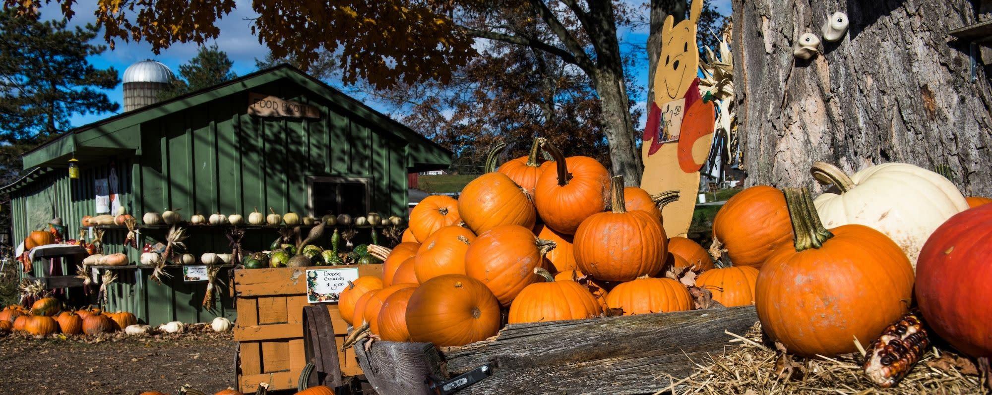 Pumpkins on display at Hahn Farm