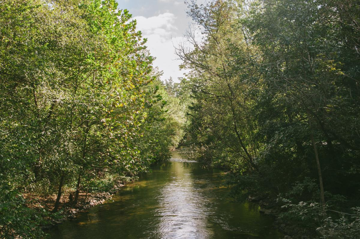 A summer view of the Little Lehigh Creek at Dorothy Rider Pool Wildlife Sanctuary