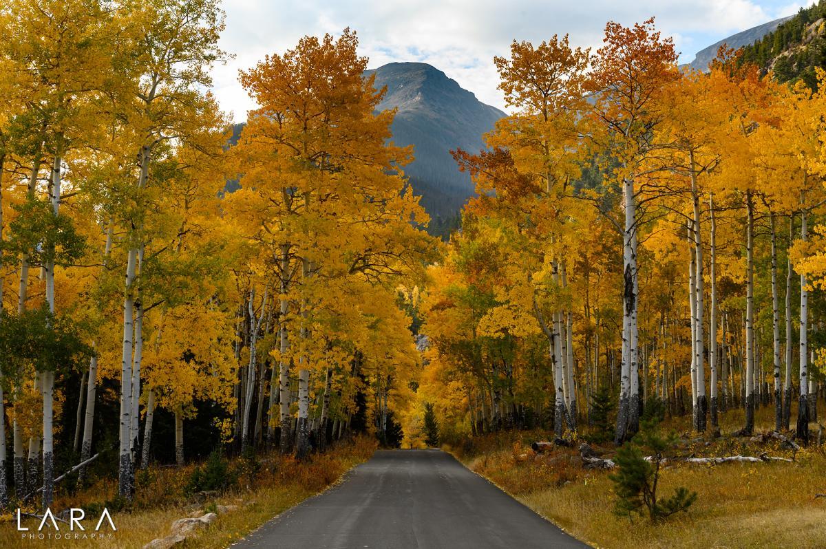 sean lara old fall river road