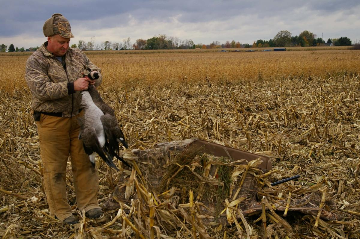 A hunter with a pair of Canada geese bagged in a Midland County cornfield