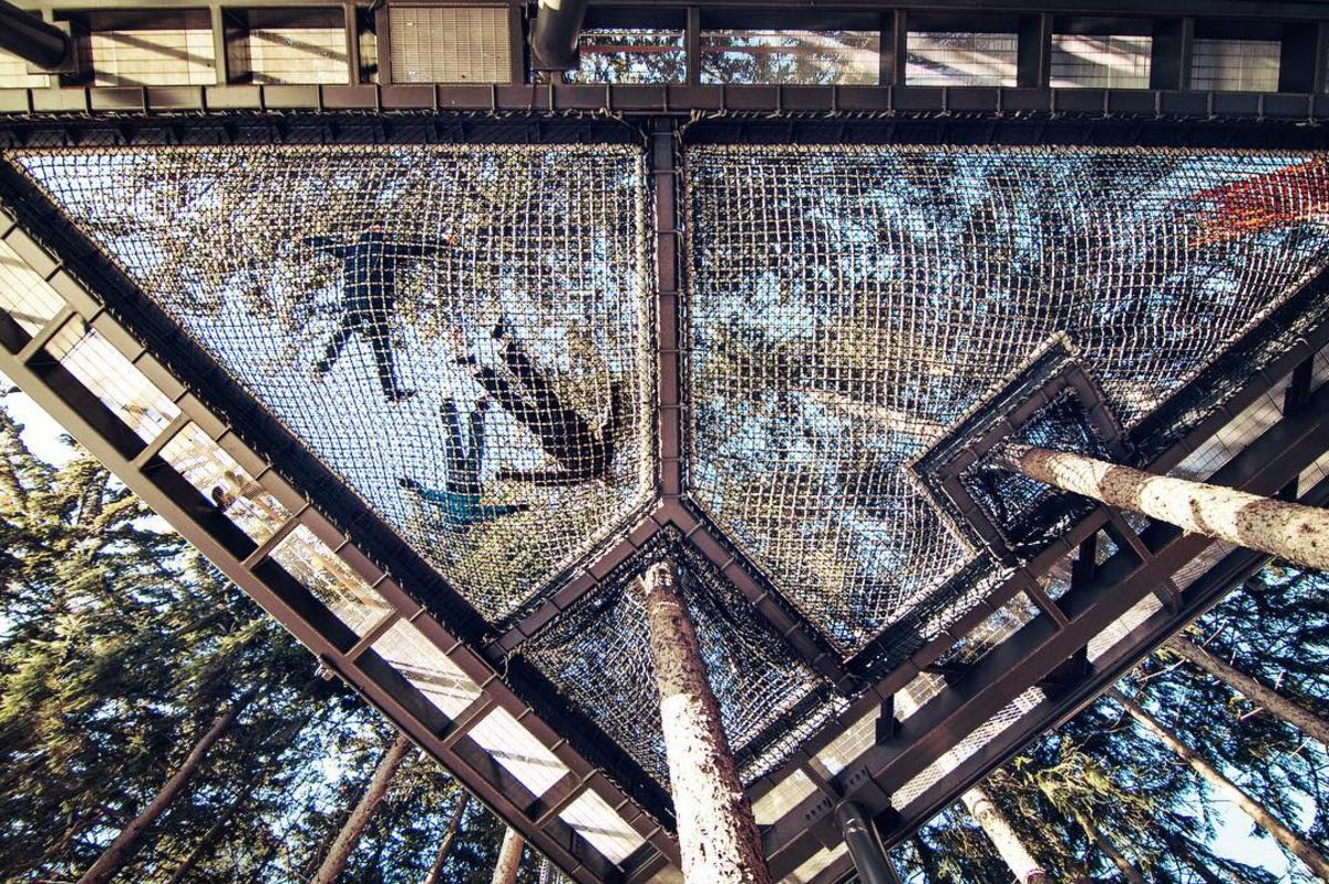 View from the ground looking up through a grove of spruces, where three kids are laying in a giant cargo net hammock suspended high in the forest along the Canopy Walk at Whiting Forest of Dow Gardens in Midland