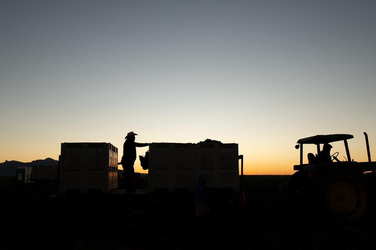 Migrant workers at sunset in Hatch, NM